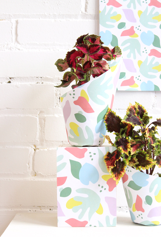 wrapping-paper-plants-550
